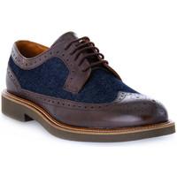 Obuća Muškarci  Derby cipele Frau SIENA TESTA MORO Marrone
