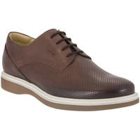 Obuća Muškarci  Derby cipele IgI&CO 1107 Smeđa