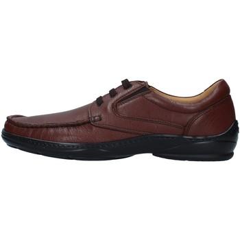Obuća Muškarci  Derby cipele Melluso U47038A BROWN