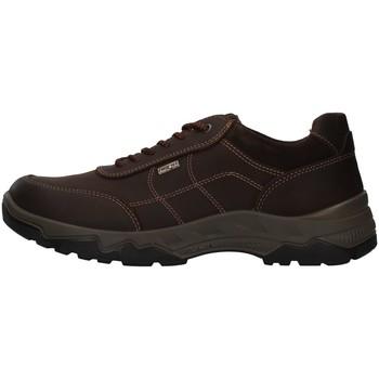 Obuća Muškarci  Pješaćenje i planinarenje Enval 8218022 BROWN